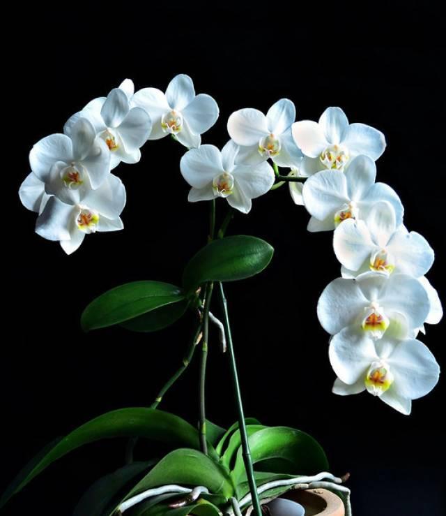 兰花图片 兰花的品种和图片 中国兰花图片大全 | 花生活