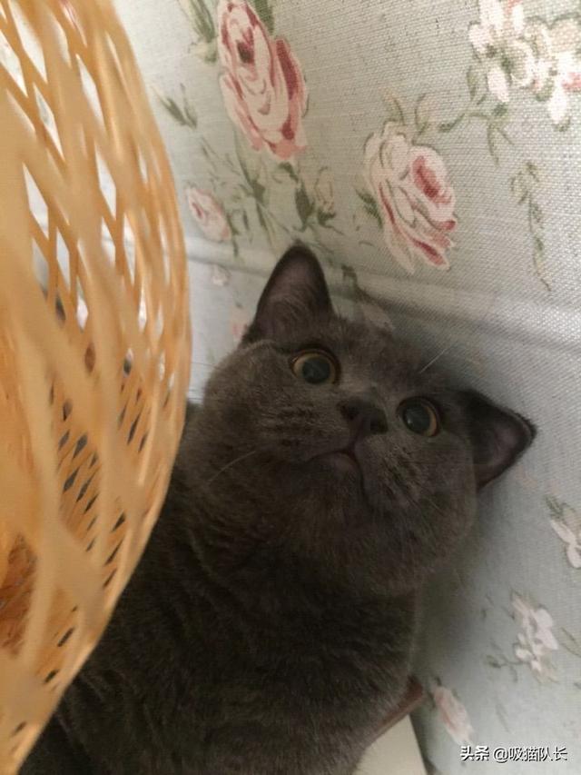 猫的智商到底能有多高?看网友家小黑猫的神操作吧-第17张图片-深圳宠物猫咪领养送养中心