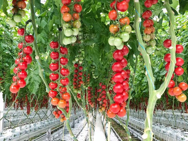 一亩地的花卉温室大棚做下来原来需要这么多钱