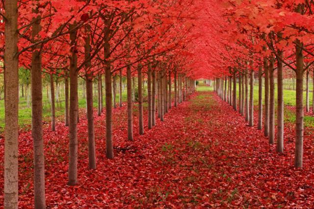 自然美丽的风景头像,图片大全,高清,图库-回车桌面