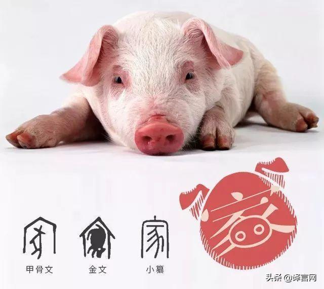 猪年典故 关于猪年的小常识