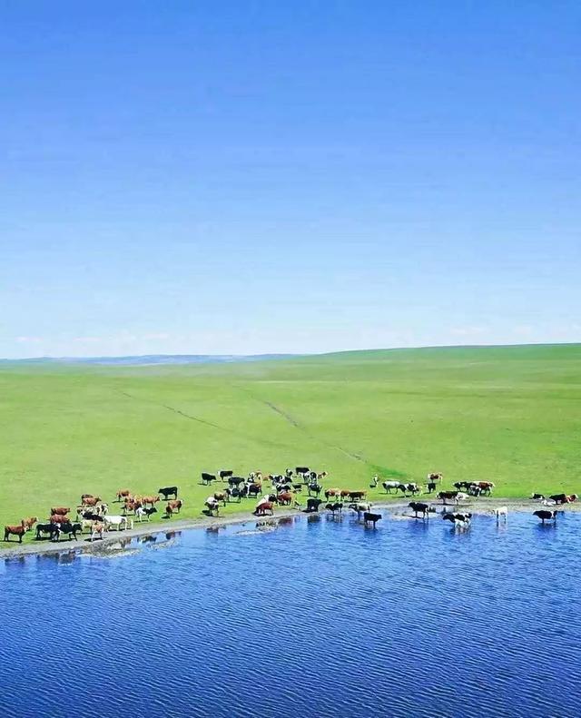 内蒙古大草原好玩吗