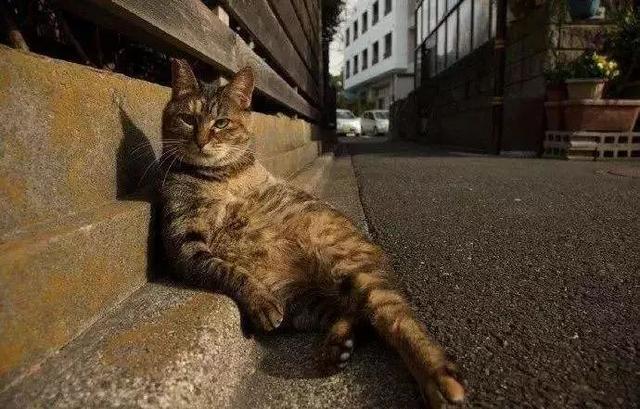 为什么猫咪在发情期间喜欢到处乱尿,并且气味比平时的尿液难闻?-第5张图片-深圳宠物猫咪领养送养中心