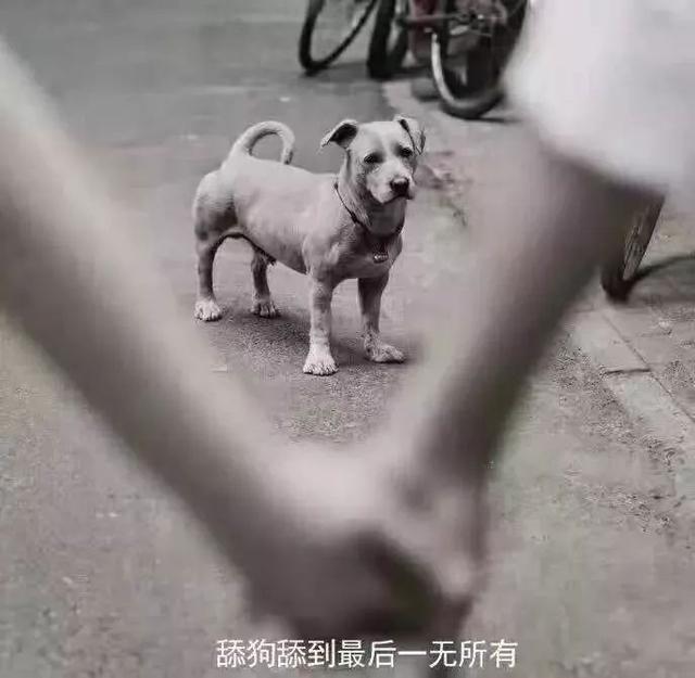 """舔狗舔到最后一无所有,看网络上的""""舔狗""""记录,是什么原因造成"""
