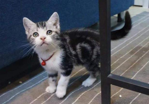 猫咪在家里上蹿下跳,这是天性使然,铲屎官可千万别去改变它们-第4张图片-深圳宠物猫咪领养送养中心