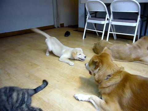 狗狗这3个姿势,其实是在向主人求助,你知道吗?