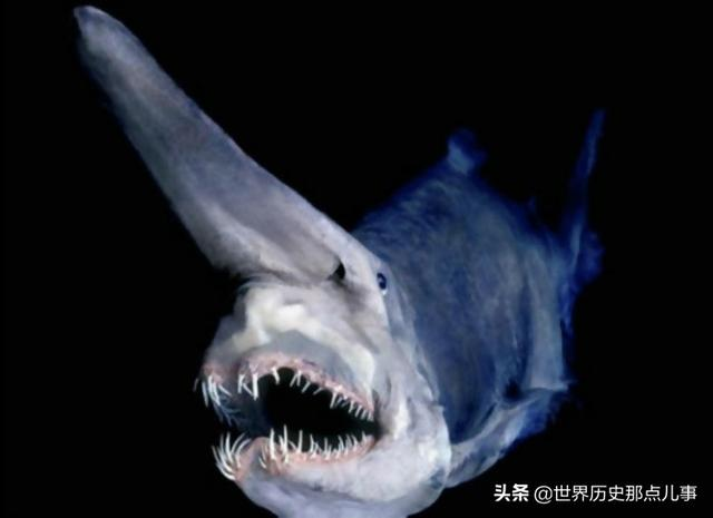 海底生物简笔画