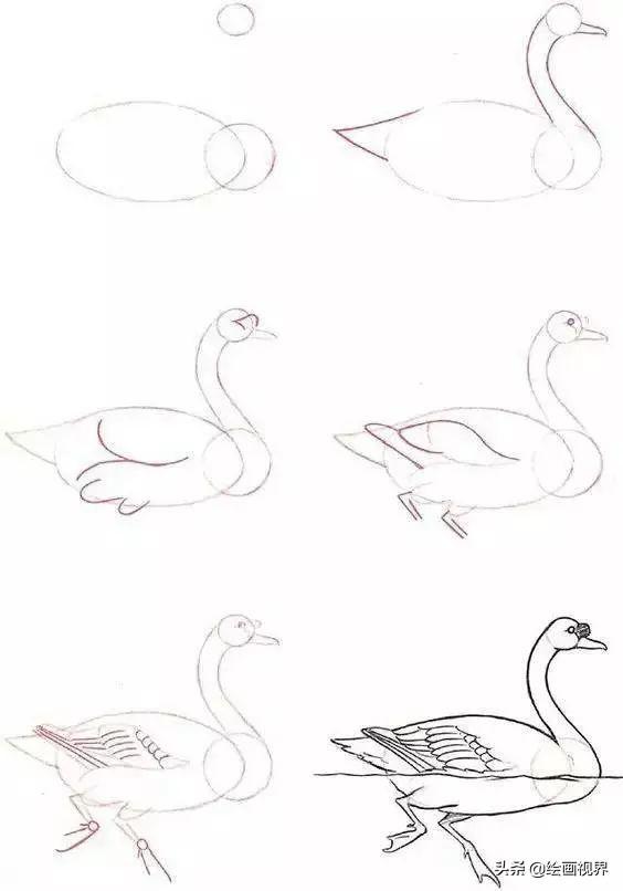 各种小动物的脚印图片