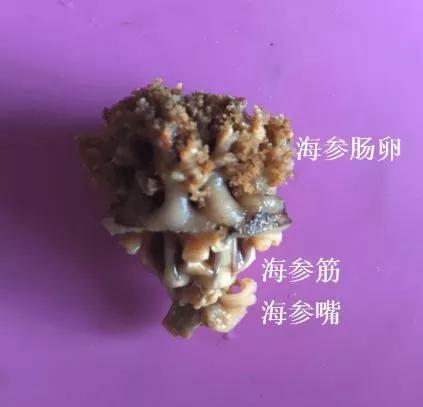众测:一朵海参花的前世今生
