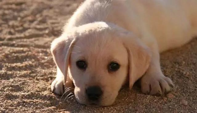 重磅!佛山养犬申请取消管理费,草案修改稿下月三审