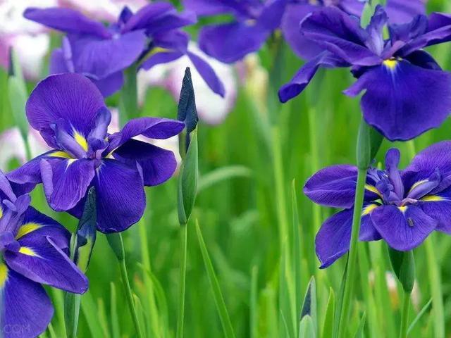 可以食用的花有哪些-全民百科
