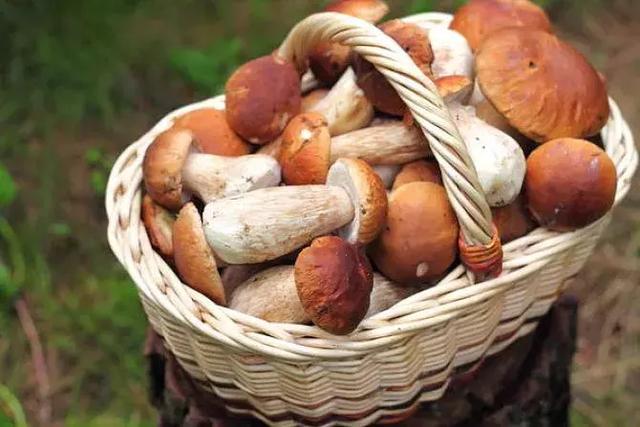 蘑菇简笔画彩色