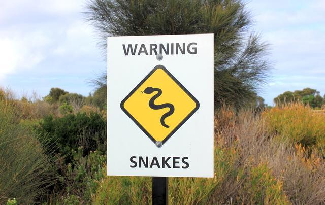 五步蛇图片大全