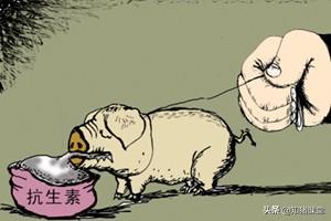注意了!这8类怀孕母猪禁用药,喂错了会有生命危险