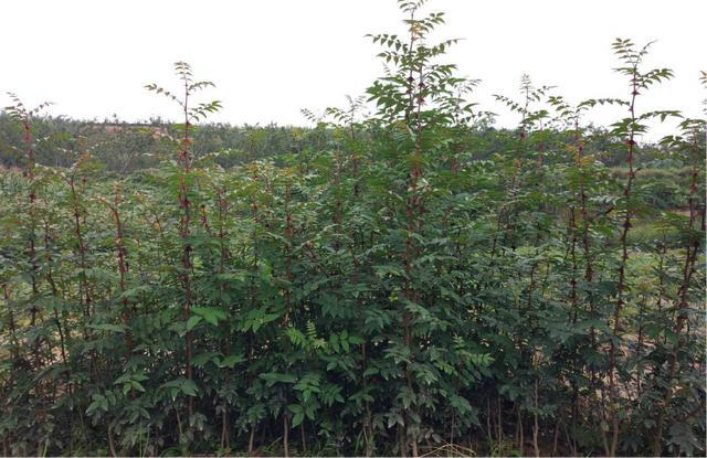 大力发展绿化种苗产业   全面推进生态文明建设——临夏州林木种苗产业发展现状及市场形势分析