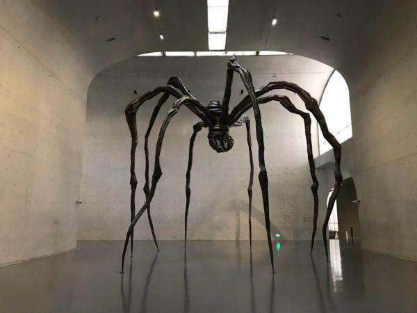 世界上最大的蜘蛛吃蛇