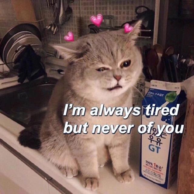 「猫咪爱心头像」10s点赞收获恋爱运魔方甜点壁纸