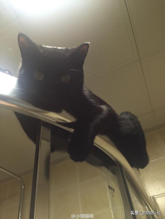 猫的智商到底能有多高?看网友家小黑猫的神操作吧-第1张图片-深圳宠物猫咪领养送养中心