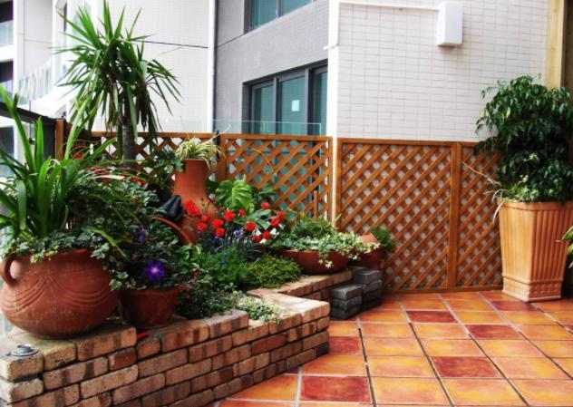 过年送人什么花好盆栽,这8种盆栽寓意美好_植物之家
