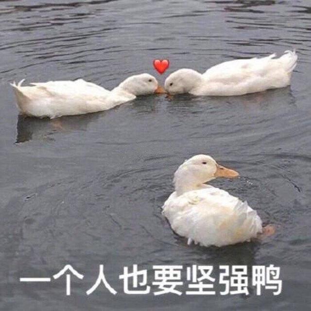 可达鸭要钱表情包全套_可达鸭表情包下载_QQ表情_下载之家手机版
