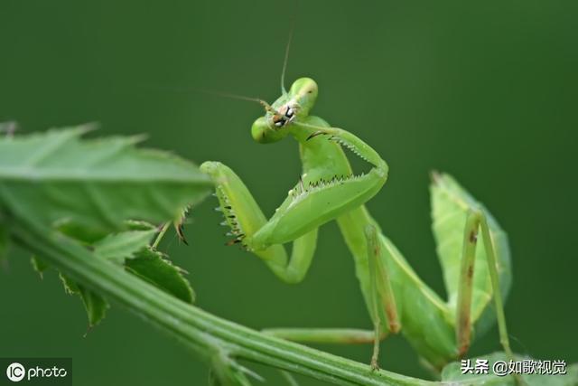 谁有昆虫奸查的游戏或者图片呀!!