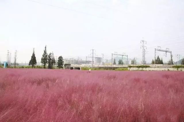 盘点瓯江畔那些美美哒的售楼处,捎带看看温州哪里的花最好看?