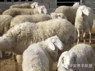 移动式羊舍