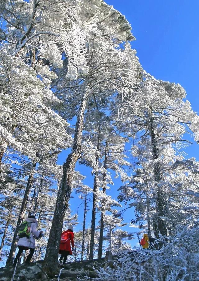 昆明轿子雪山下雪了!入冬以来的第一场雪!(附游玩攻略)