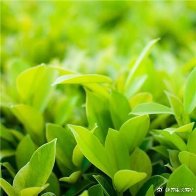 根茎中药材名称及图片