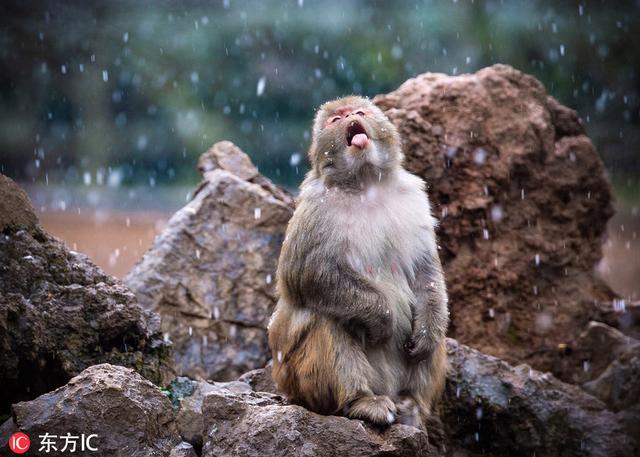 """又萌又好笑!雪天里的""""动物世界"""",你错过了我拍给你看"""