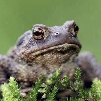 """蟾蜍青蛙傻傻分不清?不光看外形,""""赖格宝""""主要区别在这里……"""