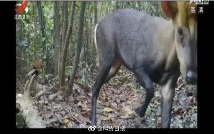 云南贡山县城图片
