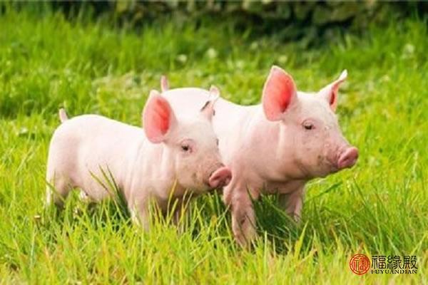 女子与猪同床4年 这个世界太疯狂了小白菜都让猪拱了 | 北晚...