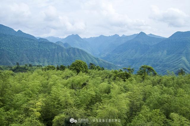 旅游贵州竹海森林公园