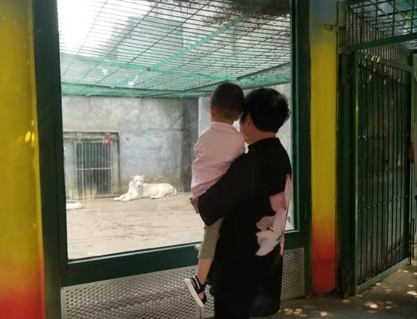 国庆节去动物园作文_文书帮