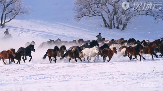 内蒙古锡林郭勒马图片
