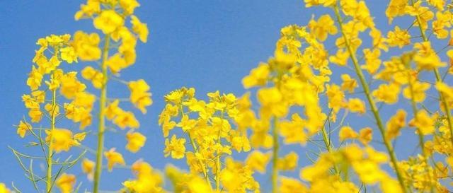 """诗词,飞花令:上百句含""""春""""的经典诗词,一起来品"""
