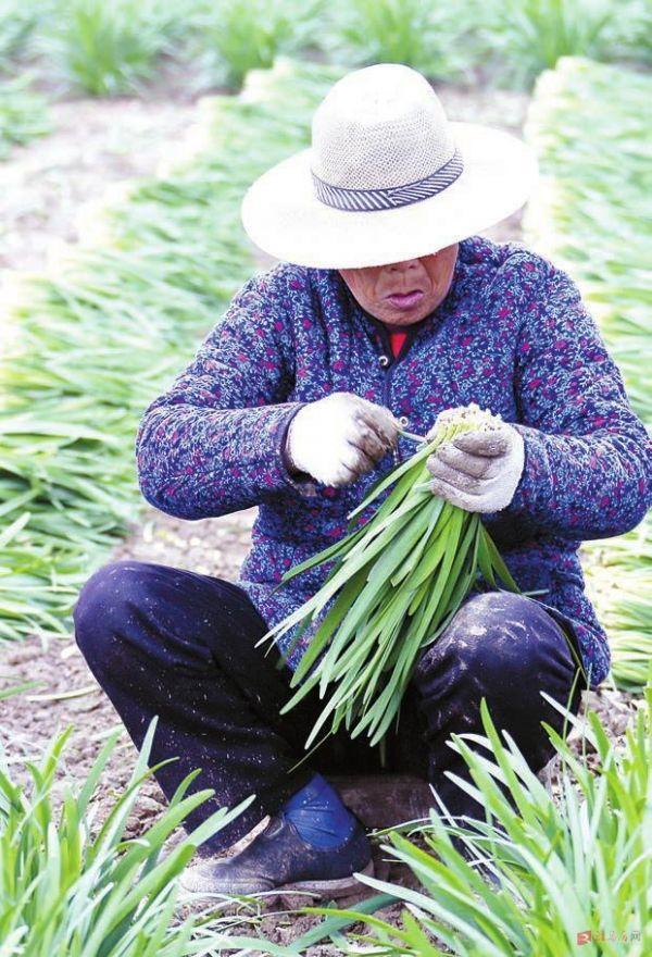 烤韭菜图片