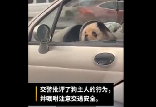 熊猫图片大全可爱头像
