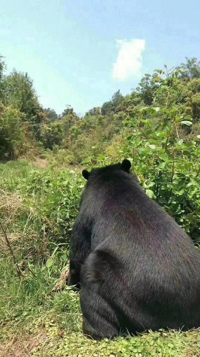 大黑熊头饰简笔画