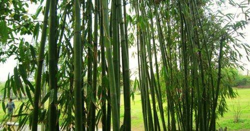 室外耐阴耐寒常绿植物