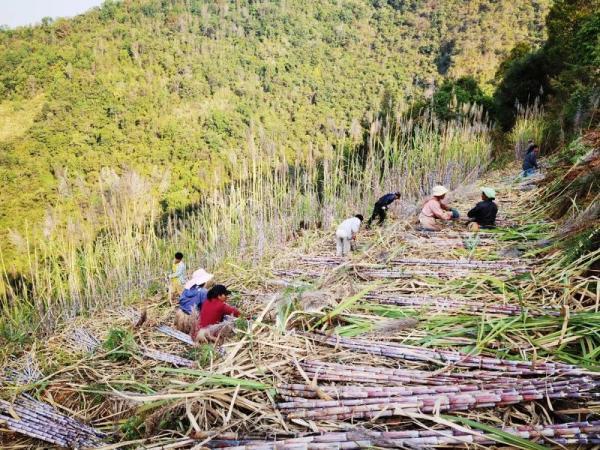 普洱西盟县景点图片