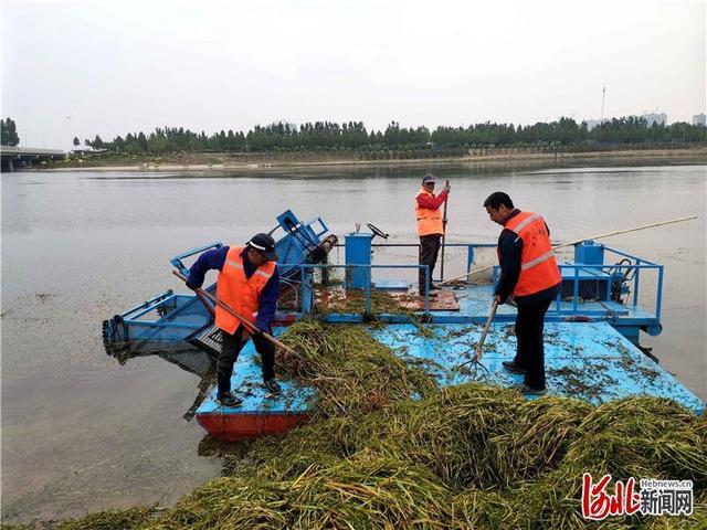 无人船打捞垃圾图片