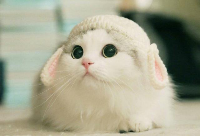 猫咪在家里上蹿下跳,这是天性使然,铲屎官可千万别去改变它们-第3张图片-深圳宠物猫咪领养送养中心