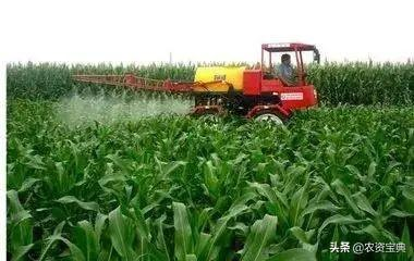 须知!玉米控旺,什么时间打药最好?做好每亩多收两百斤