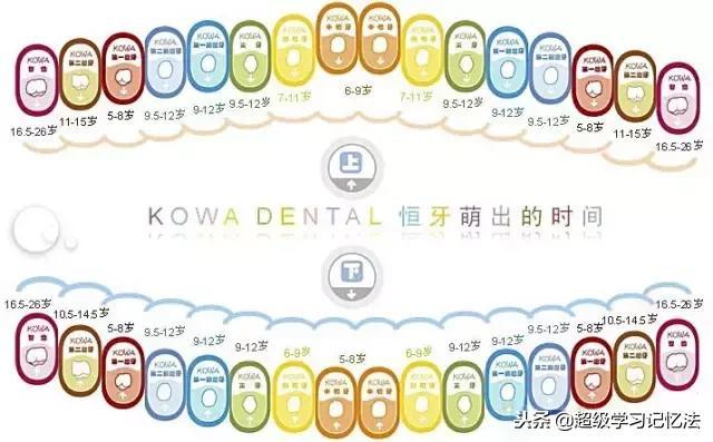 六岁儿童换牙顺序图
