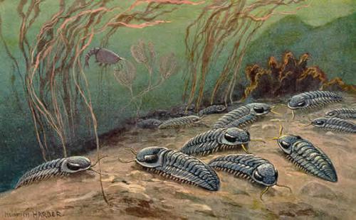 5.6亿年前地球最成功的生物为何会灭亡,人类将是一样的命运吗?-第1张图片-IT新视野