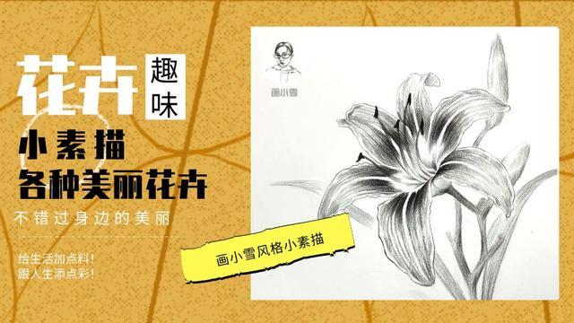素描花朵图片