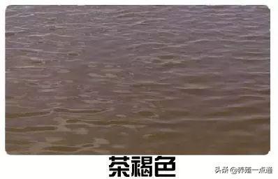 水产养殖,看水色辨水质;鱼虾蟹养殖,水调好成功一半