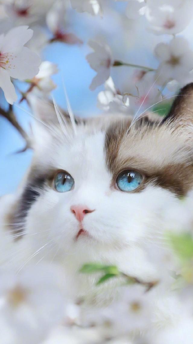 十大漂亮貓